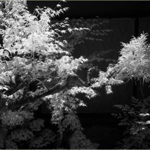 No.1620 - 1623                 「植物の季節 -2-」