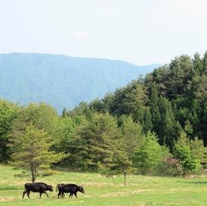 春の放牧場にて
