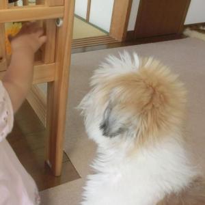 ボール遊び ~1年後の太郎と姫~