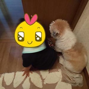ぞろぞろ~1年後の太郎と姫~