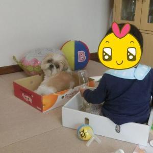 箱犬増殖中 ~1年後の太郎と姫~