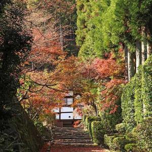 紅葉の超穴場と、デヴィッド・ボウイが愛した庭。/正伝寺