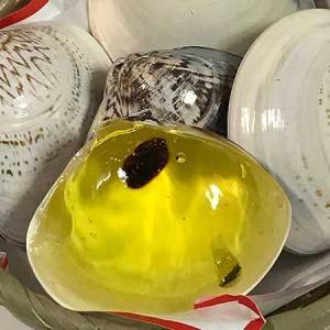 はまぐりの貝殻の中身は涼しいお菓子:亀屋則克の浜土産