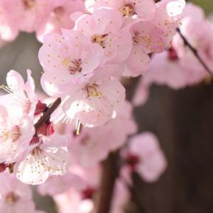 平成最後の花を咲かせよう。