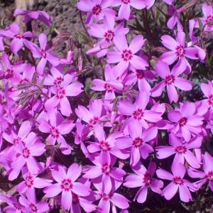 小さな花 2