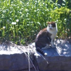 トロントの猫