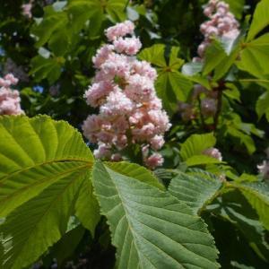 ヨーク霊園に咲く花
