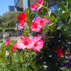 トロントの花
