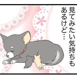③命への責任【愛犬の避妊手術編】