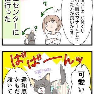 ⑧犬用のおむつを買った【愛犬の避妊手術編】