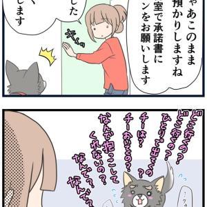 11、愛犬を預ける時の気持ち【愛犬の避妊手術編】