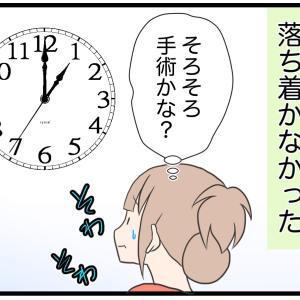 14.避妊手術後の愛犬の傷【愛犬の避妊手術編】