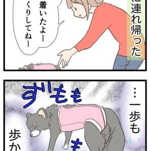 15.術後、帰宅した愛犬の気持ち【愛犬の避妊手術編】