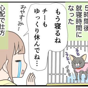 17.手術翌日の愛犬の様子【愛犬の避妊手術編】