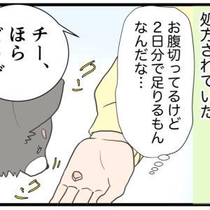 18.愛犬に薬を飲ませる【愛犬の避妊手術編】