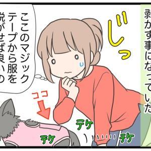 19.愛犬に抱いた淡い期待【愛犬の避妊手術編】