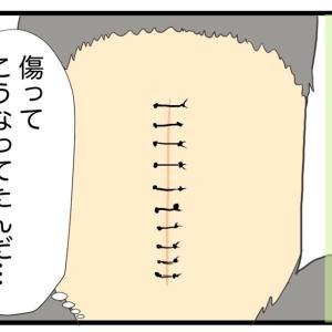 23.抜糸の時、愛犬の反応は⁈【愛犬の避妊手術編】