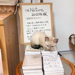 店内に保護猫がいます