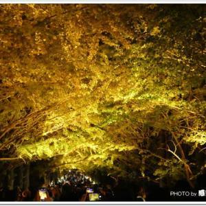 昭和記念公園 紅葉サイトアップ!191116