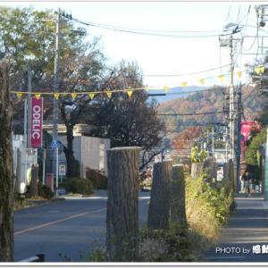 羽村市川崎街道のイチョウ伐採!