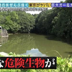多摩地区情報『緊急SOS!池の水ぜんぶ抜く大作戦』20200726~町田市~