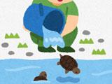 【画像】 川の上流から流されてきたカメを助けたら、その正体がまさかのww = 名護市