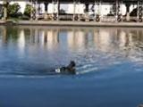 【動画】 大井競馬場から馬が逃げ出し、運河を泳いで逃走する姿が激撮され騒然 「また大井競馬場」