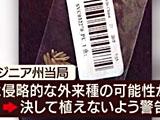 【画像】 中国から届いた「謎の黒い種」 ついに正体が判明した!?とネット騒然