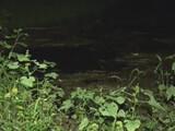 3歳男児が川で溺れ死亡 家族とキャンプの最中、姿が見えなくなった場所から200メートル下流で発見 = 山口