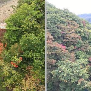 【県央】〔八幡平市〕八幡平の紅葉が見ごろです!