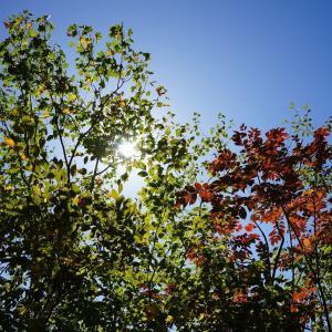 【県央】〔雫石町〕紅葉と「エメラルドグリーン」の国見温泉