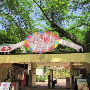 【県南】〔花巻市〕花巻温泉①~バラ園60周年~