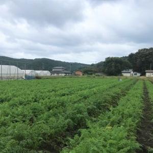 【沿岸北部】〔山田町〕やまだで秋野菜収穫体験