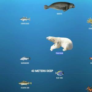 The Deep Sea・深海