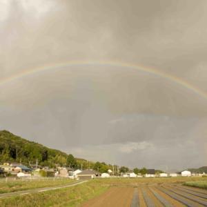 僕の人生で一番デカい虹を見た日