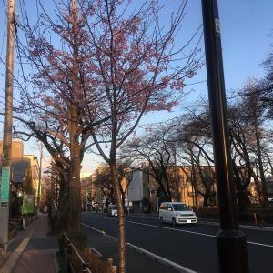 桜の開花状況を観に 【カウボーイ家族 国立店】で早い夕食・・・