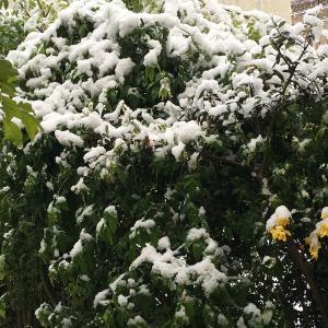 不要不急の外出自粛中の大雪!!の今日・・・・