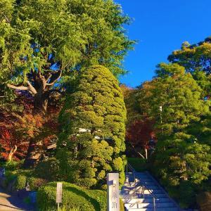 2019年の遅い紅葉 貫井神社を撮影した画像。