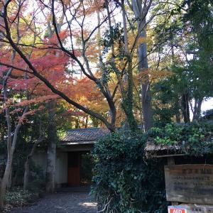 再訪問 【小金井の滄浪泉園】は秋本番の紅葉時期に行ってました。。。