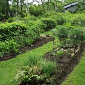 Today's kitchen garden