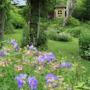 梅雨終盤の庭景色
