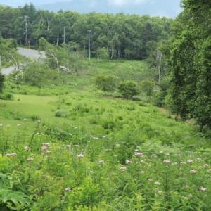 初夏の山野草観察