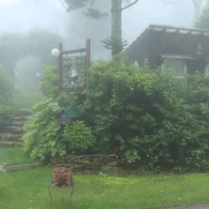 In the foggy garden