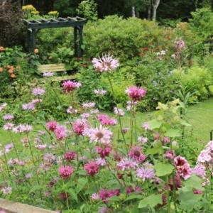 In the flowering garden