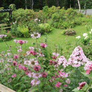 In the late summer garden