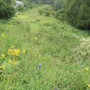 山野草も最盛期