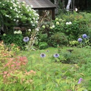 In the Sunday garden