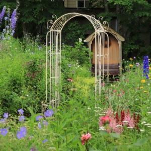Today's backyard garden
