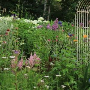In the summer garden -1-