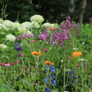 In the summer garden -2-